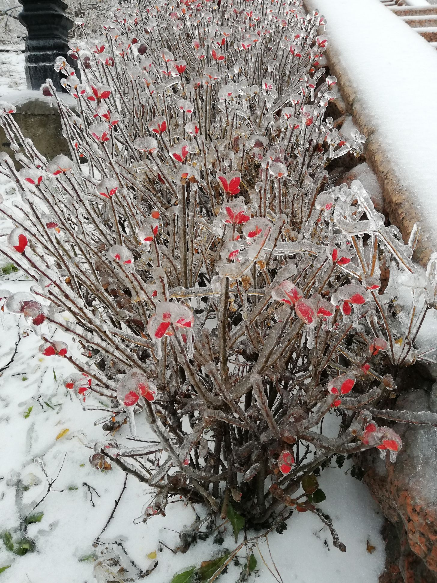 IMG_20201119_14 by .
